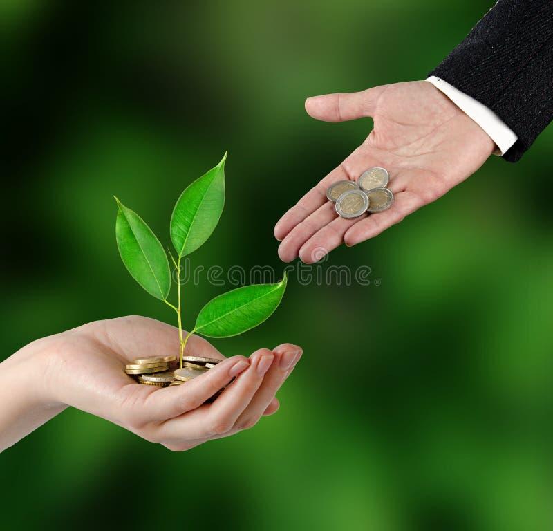 绿化事务的投资 图库摄影