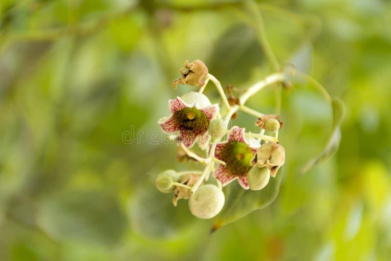 绿化在绿色背景的桃红色有斑点的花 库存照片
