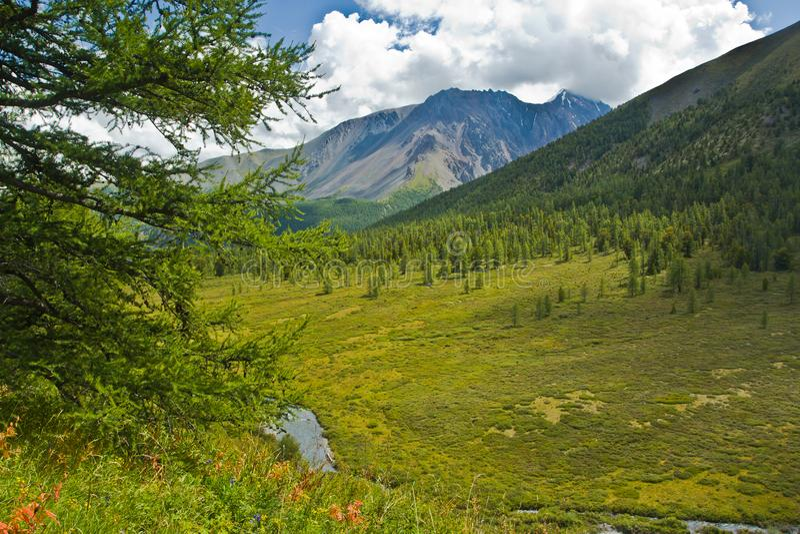 绿化山的Beautifull视图和领域、森林有阳光的和天空与落叶松属 免版税库存图片
