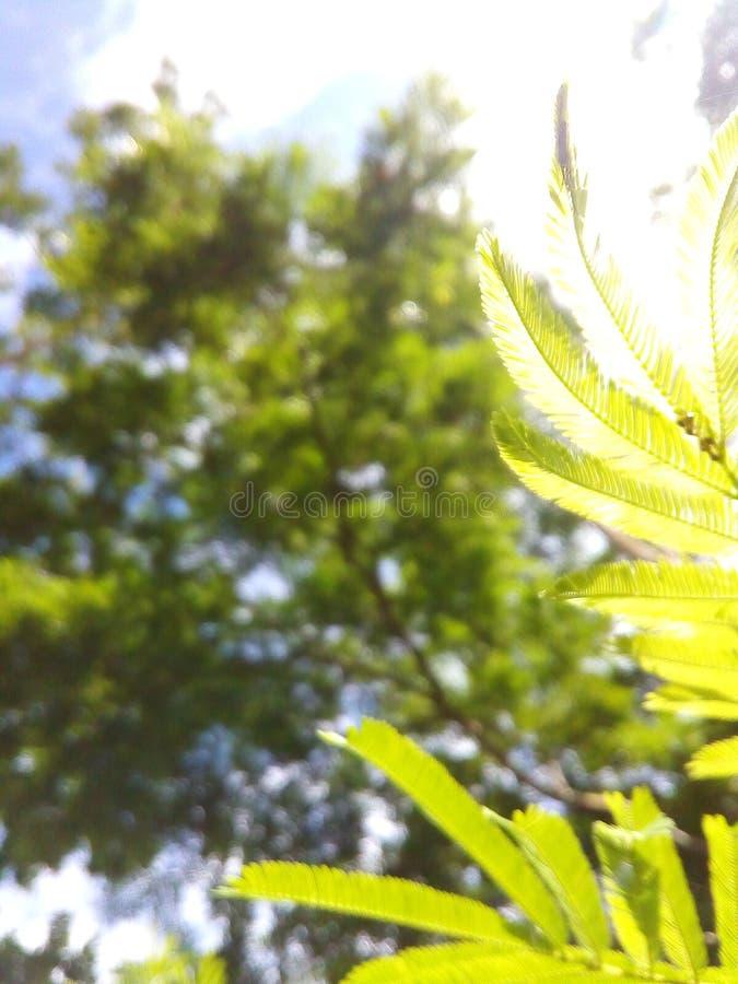 绿化接触 免版税库存图片