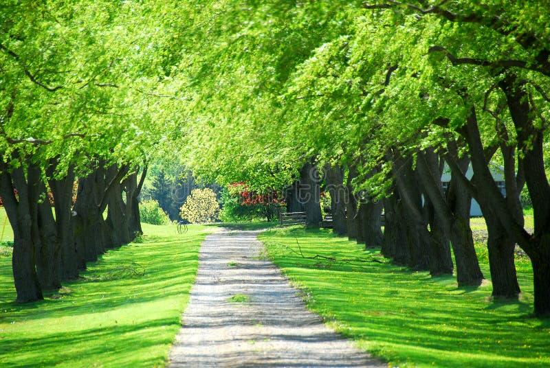绿化林荫道结构树 免版税库存照片
