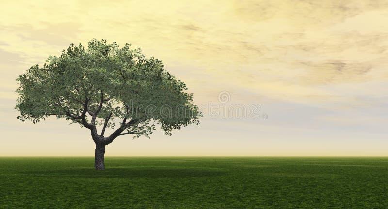 绿化结构树 向量例证
