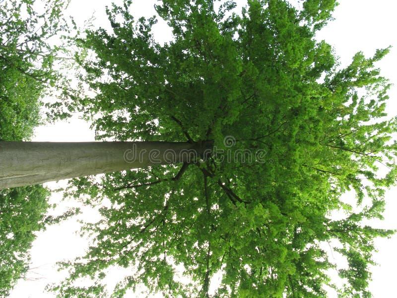 绿化结构树 免版税图库摄影