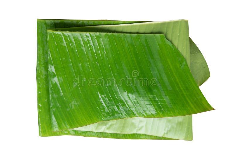 绿化被折叠的香蕉叶子孤立有背景 免版税库存图片