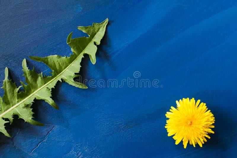 夏天最小的概念 一片绿色被雕刻的蒲公英叶子和一朵黄色蒲公英花在图片