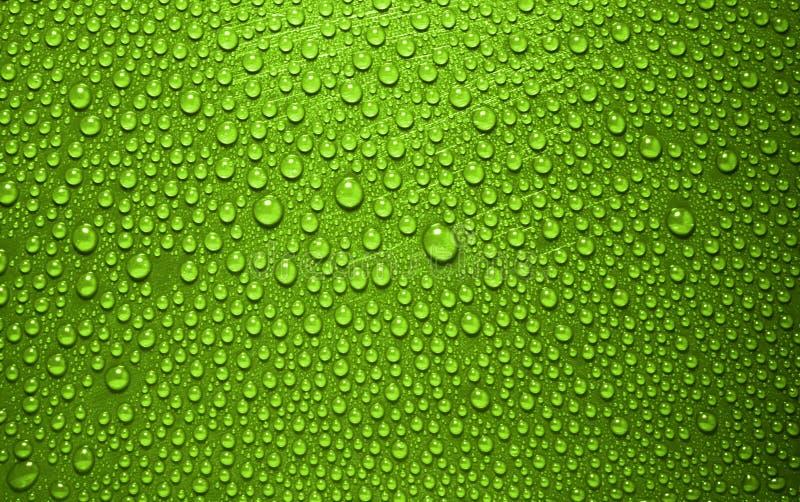 绿化waterdrops 免版税库存图片