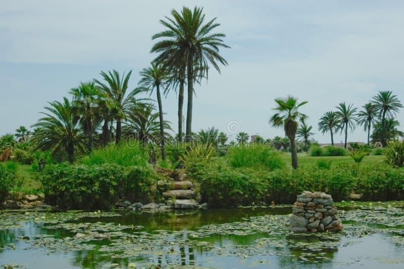 绿叶使夏天环境美化 库存照片