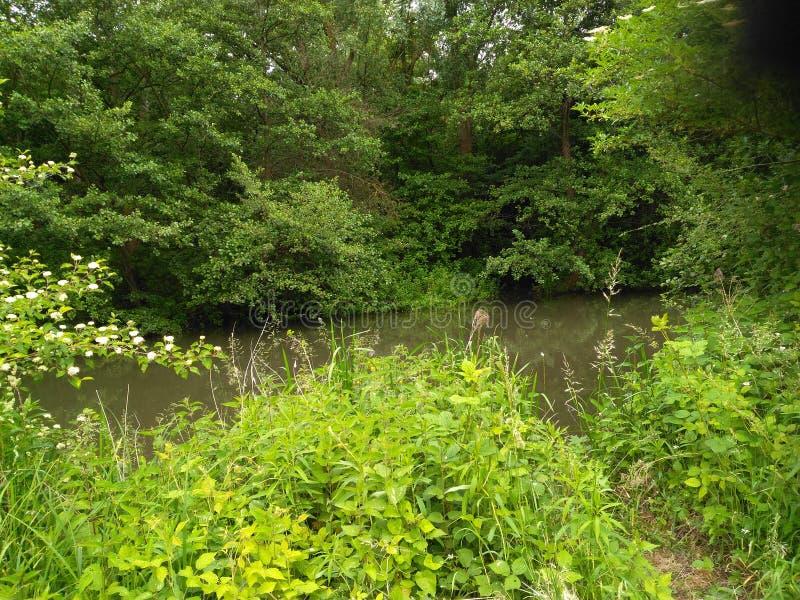 绿叶围拢的小河的秀丽 图库摄影