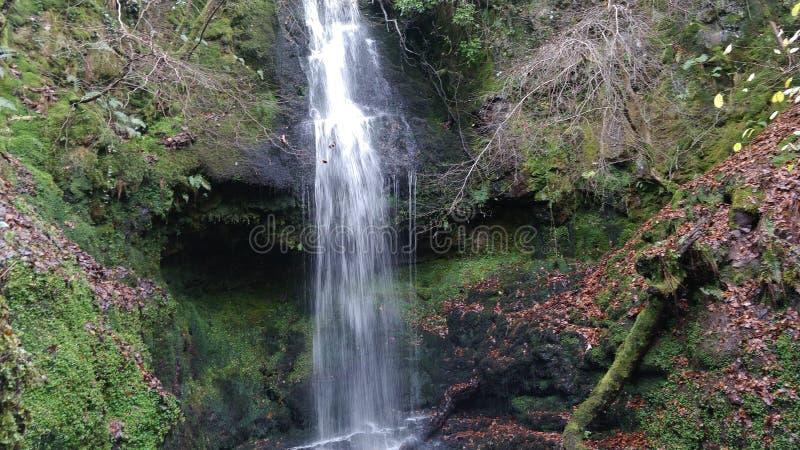 绿叶围拢的瀑布 图库摄影