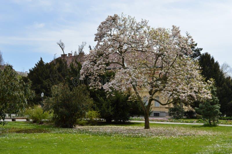 绿叶在萨格勒布市中心 图库摄影