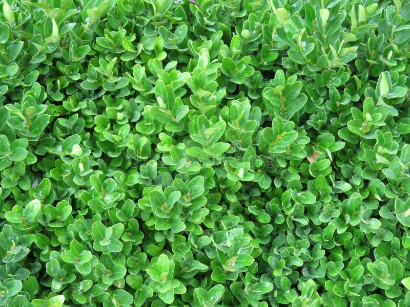 绿叶接近  图库摄影