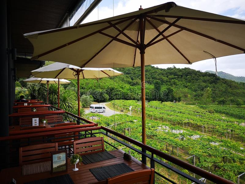 绿叶树和葡萄园在泰国 与家庭的美妙的长的周末 免版税库存图片