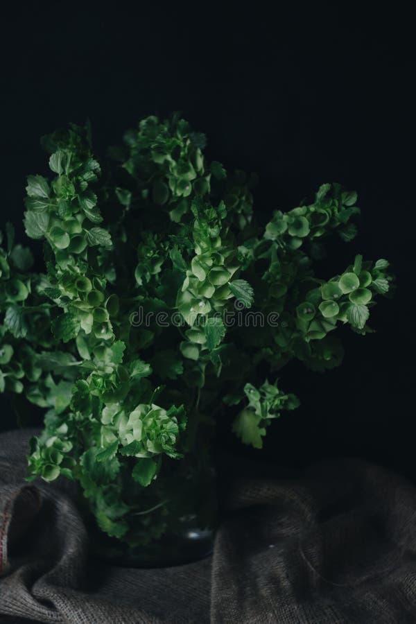 绿叶花束  库存照片