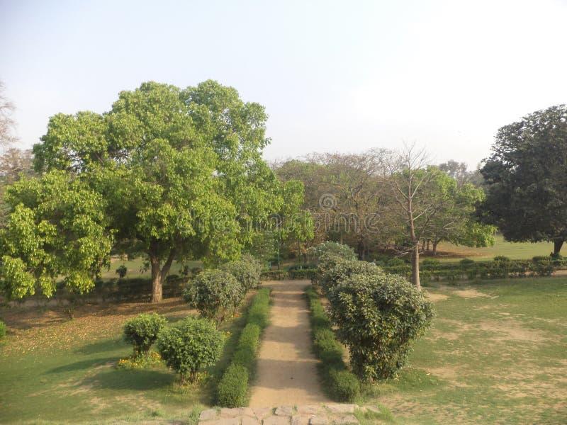 绿叶:Lodi庭院 库存照片