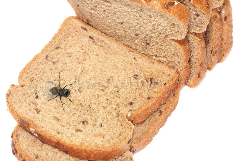 绿头苍蝇 免版税库存图片