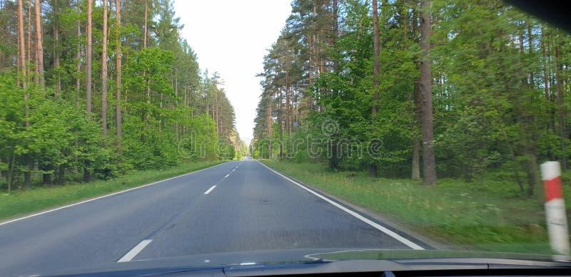 绿木中的公路 阳光日 免版税库存照片