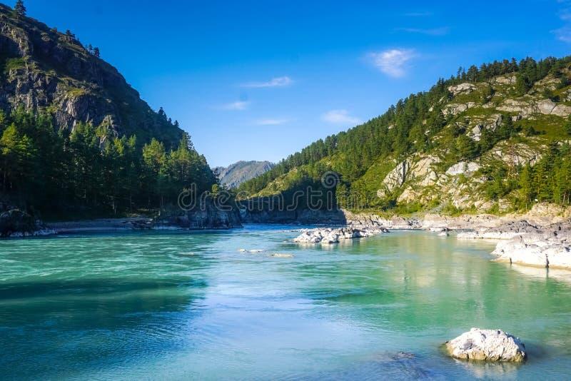 绿松石河Katun在阿尔泰 俄国 库存照片
