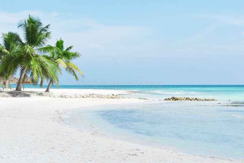 绿松石海、热带海滩、棕榈树、白色沙子和棕榈树 免版税图库摄影