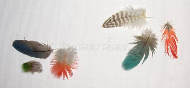 绿松石红色和布朗羽毛在白色亚麻制背景 库存图片
