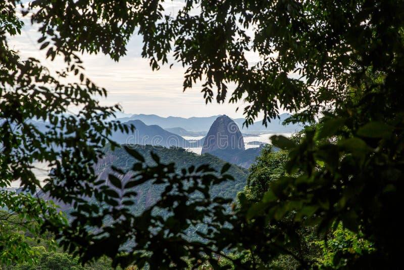 绿树架中的糖形山 巴西里约热内卢 免版税库存图片