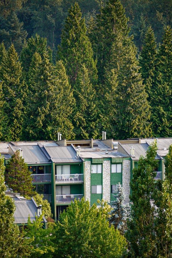 绿树背景下低层住宅楼顶 库存照片