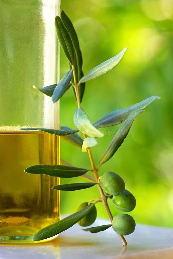 绿橄榄 免版税图库摄影