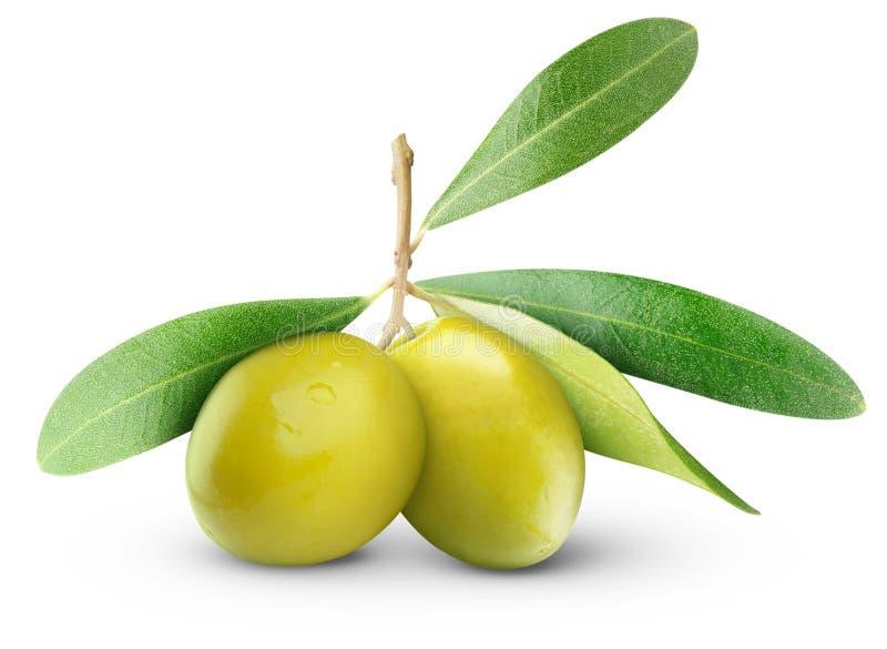 绿橄榄 免版税库存照片
