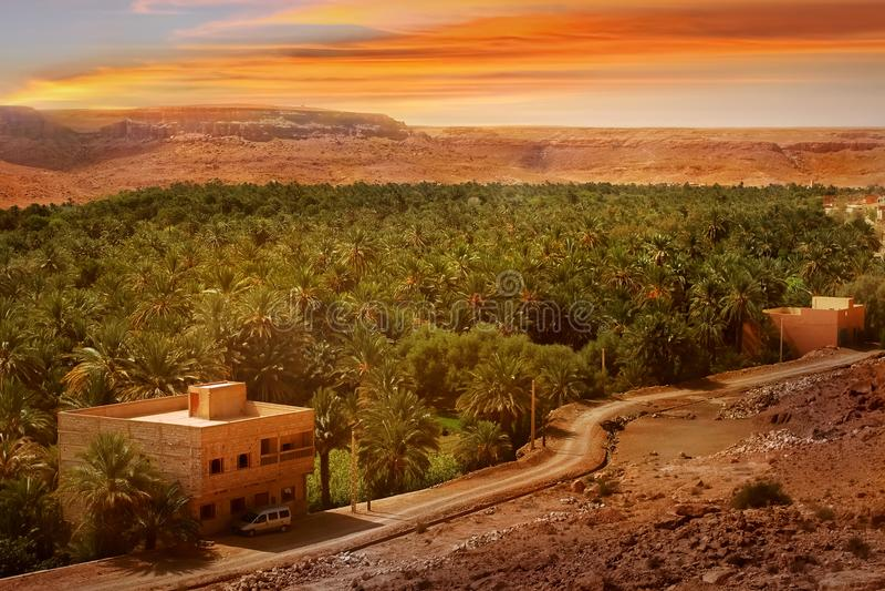 绿洲在以日落为背景的沙漠 非洲,摩洛哥 免版税图库摄影