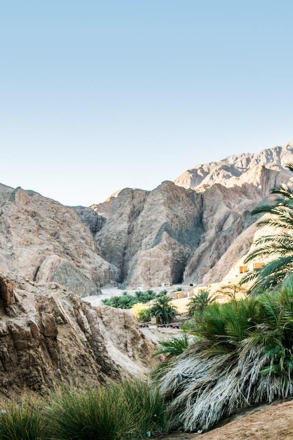 绿洲在宰海卜西奈埃及 库存照片