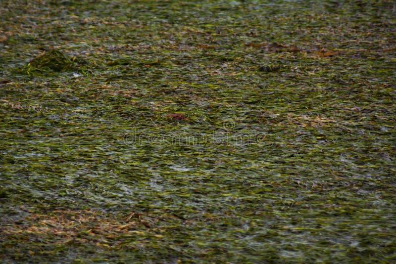 绿浪盐水湖和山 免版税库存图片
