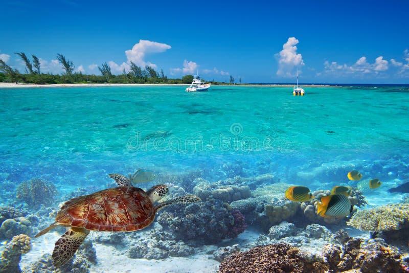 绿海龟水下在墨西哥 免版税库存照片