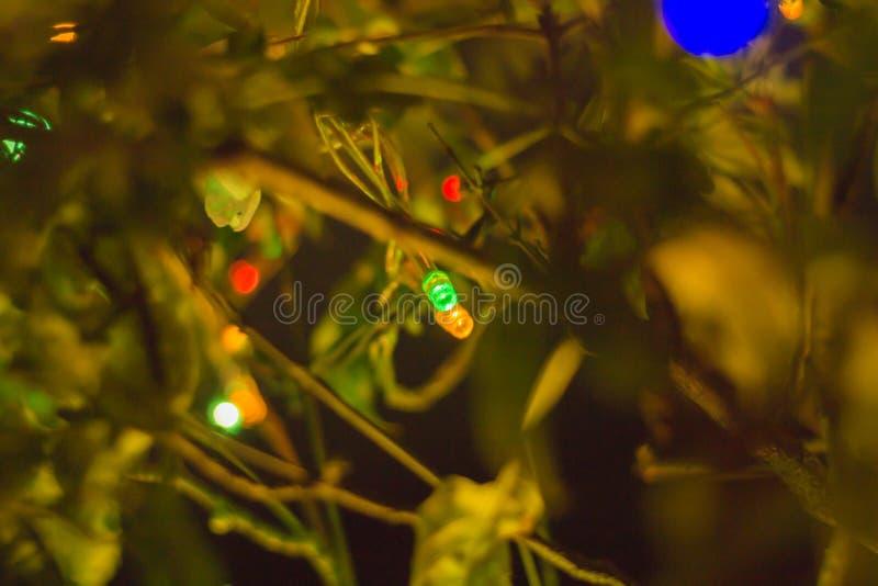绿色、黄色、红色小led L E D,派对灯在树上 免版税图库摄影