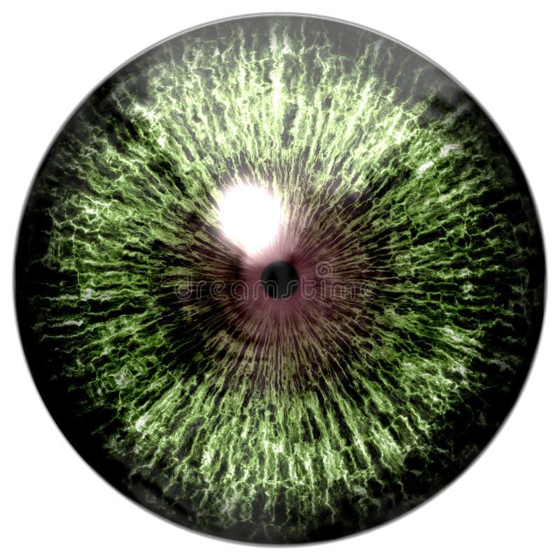绿色与褐色的colorized眼睛 免版税库存照片