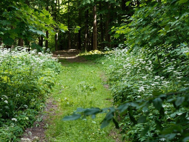 绿色丛林在夏天黑暗的森林里 库存图片