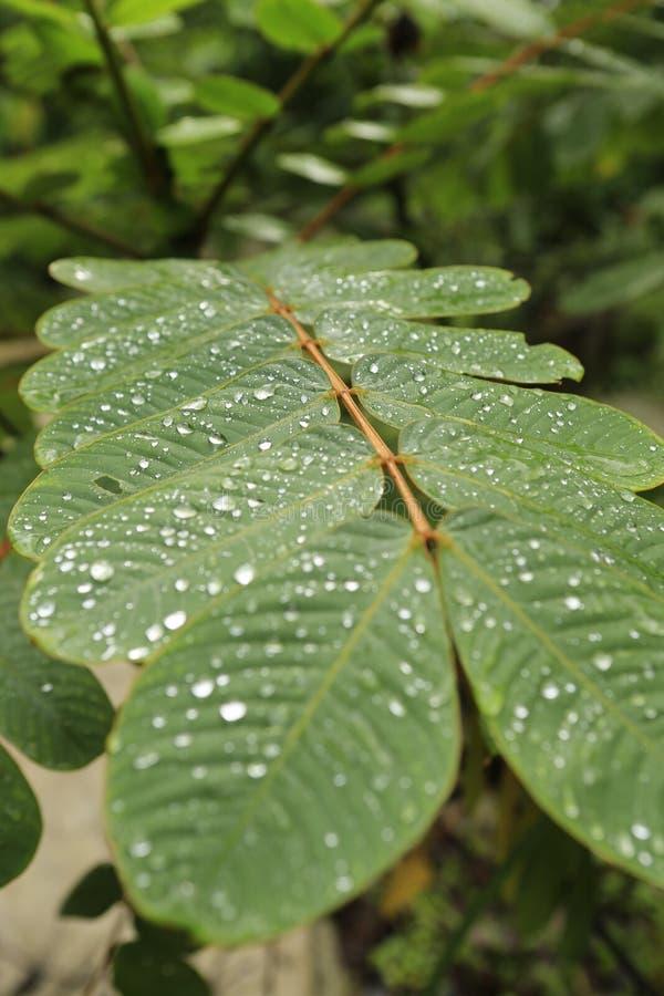 绿色事假在密林 图库摄影