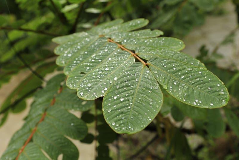 绿色事假在密林 免版税库存照片