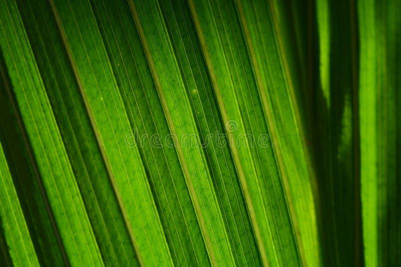 绿色事假 库存照片