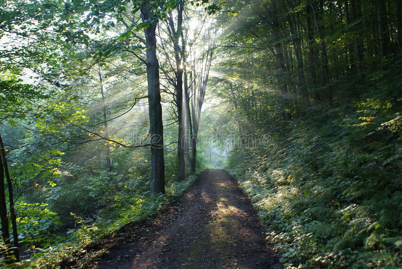 绿色光芒s亮光星期日结构树 库存照片