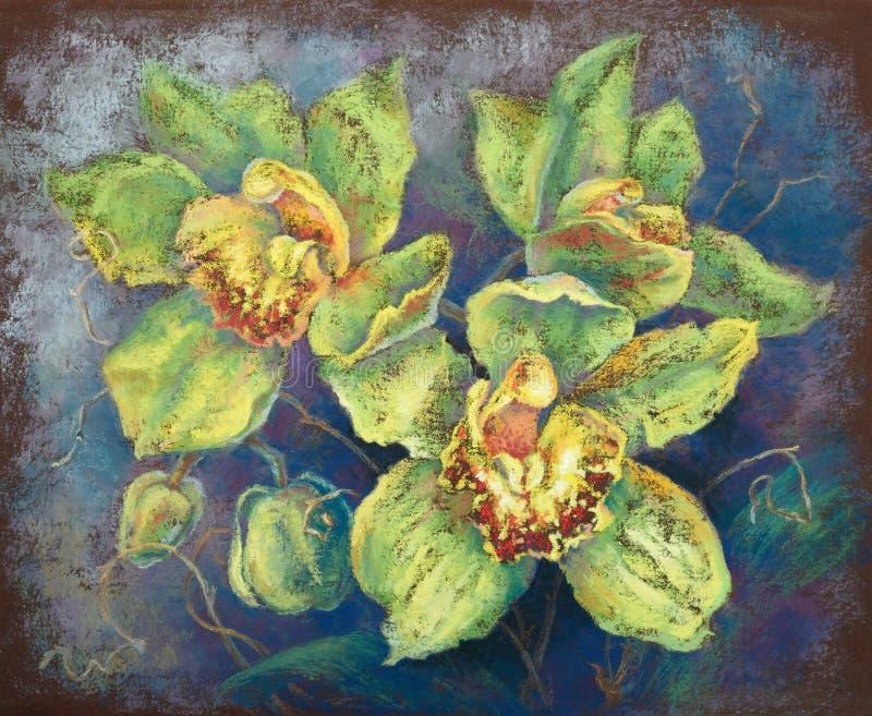 绿色兰花(手拉的淡色绘画) 免版税库存照片