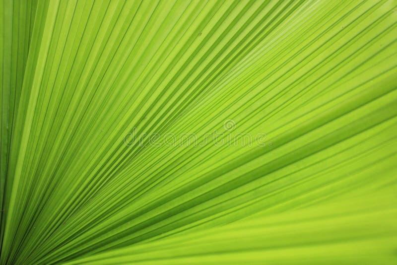 绿色叶子传播 库存照片