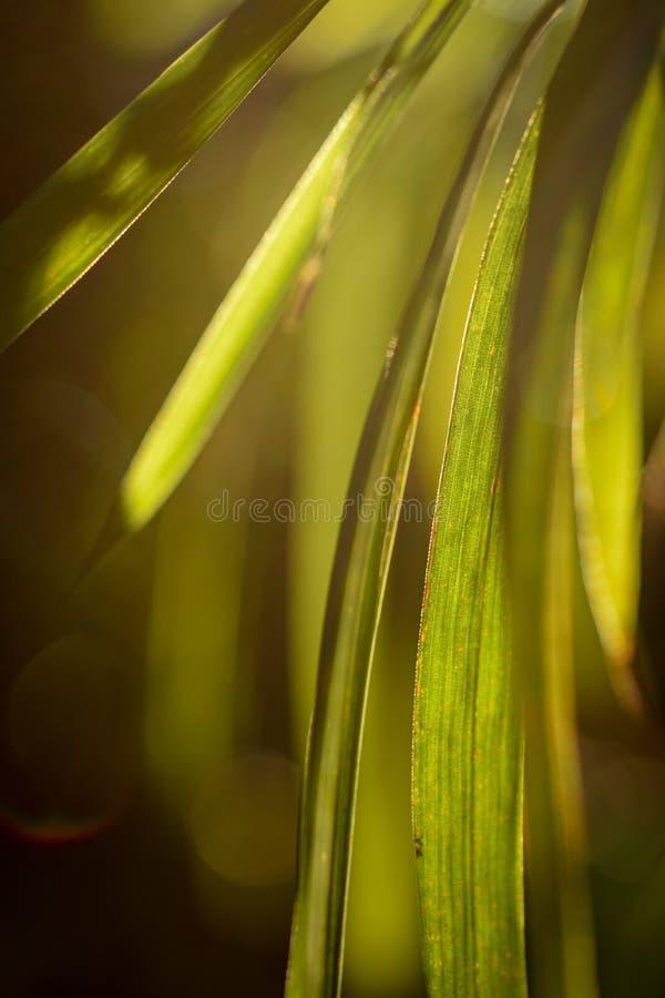 绿色叶子光,温暖的秋天太阳 免版税库存照片