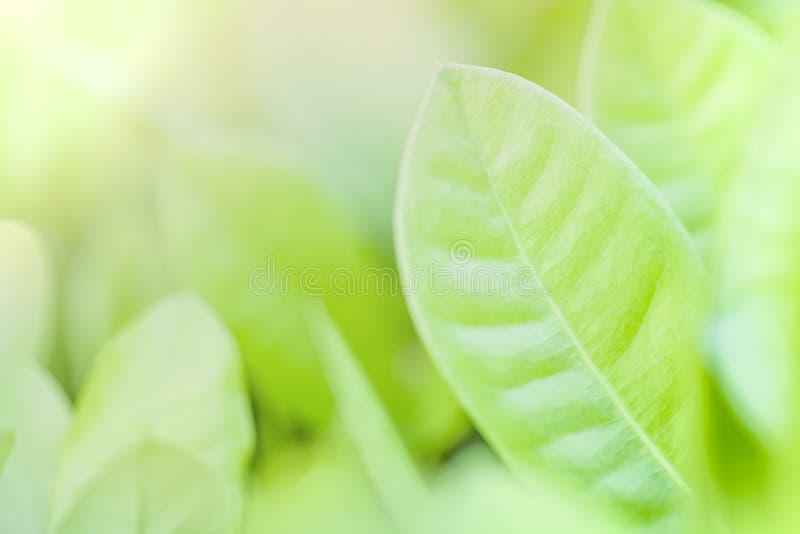 绿色叶子关闭和软的焦点  背景绿色本质 免版税库存图片