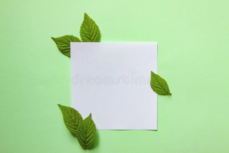 绿色叶子创造性的背景  最小的春天概念 免版税库存图片