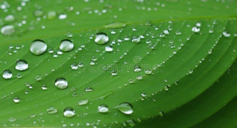 绿色叶子和下落水 库存照片