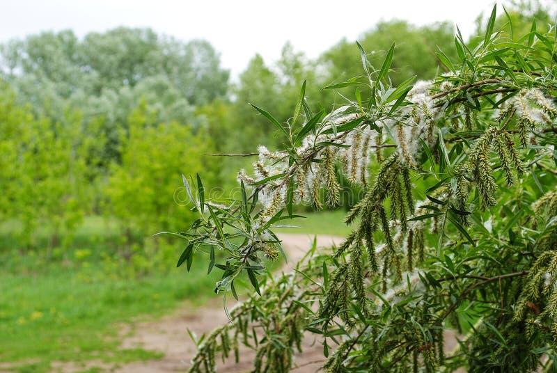 绿色叶子和开花在森林里 免版税库存图片