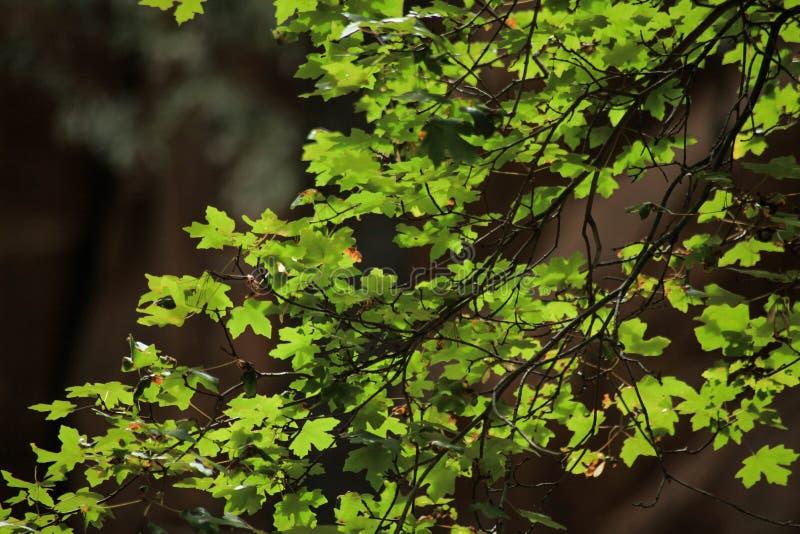 绿色叶子和早午餐 免版税库存图片