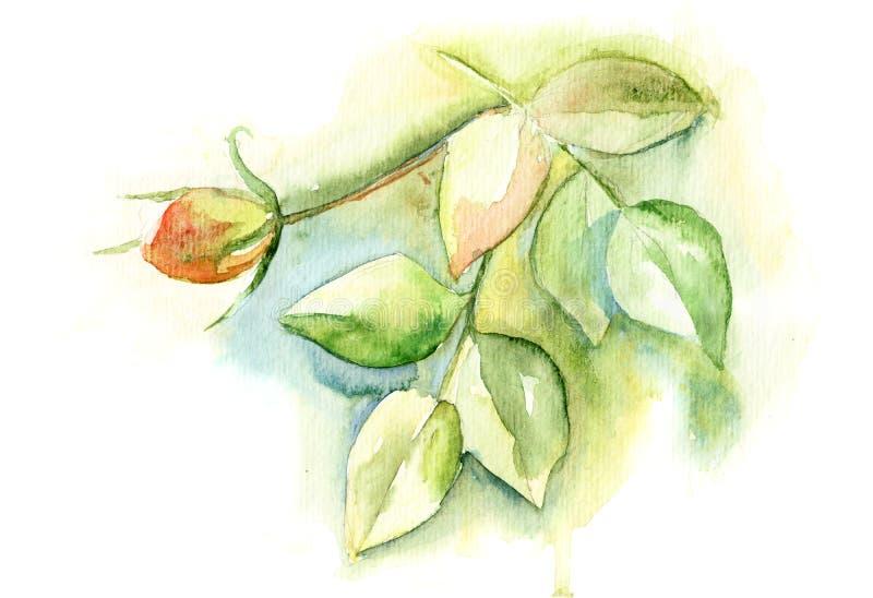绿色叶子和玫瑰色花 皇族释放例证