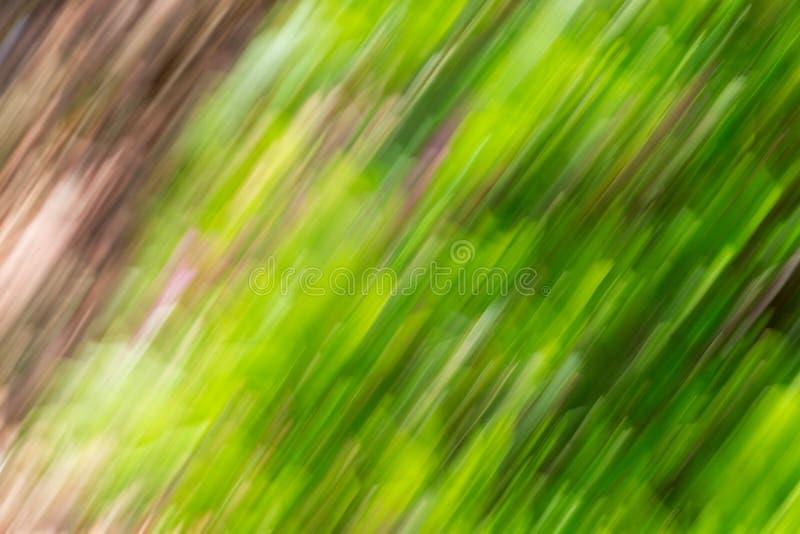 绿色叶子和花抽象背景影像与行动迷离作用 库存照片