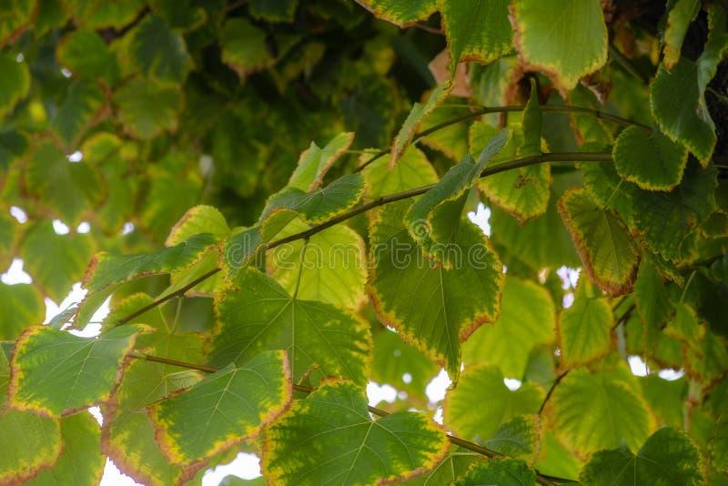 绿色叶子和落叶树 免版税库存图片