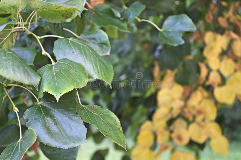 绿色叶子和黄色部分在背景中 库存图片